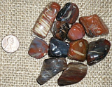 PETRIFIED WOOD TUMBLES #3